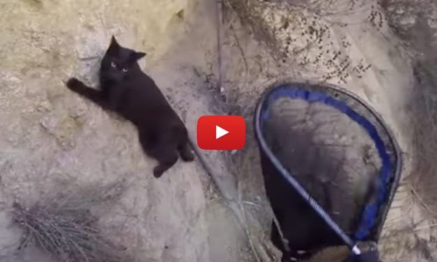VIDEO: Cat Clings for Life On Steep Cliff Until Brave Rescuers Arrive
