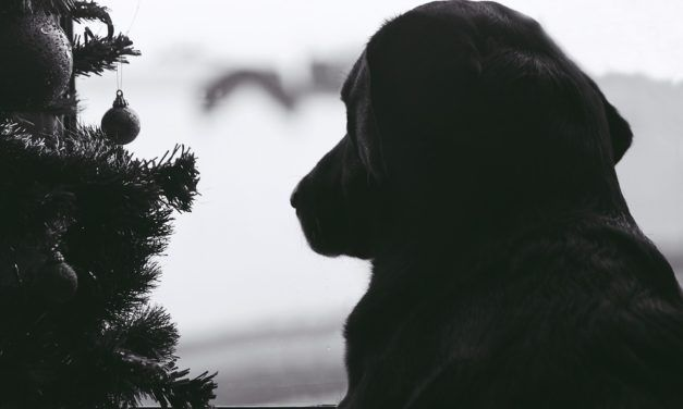 How to Help Your Local Animal Shelter During the Holidays