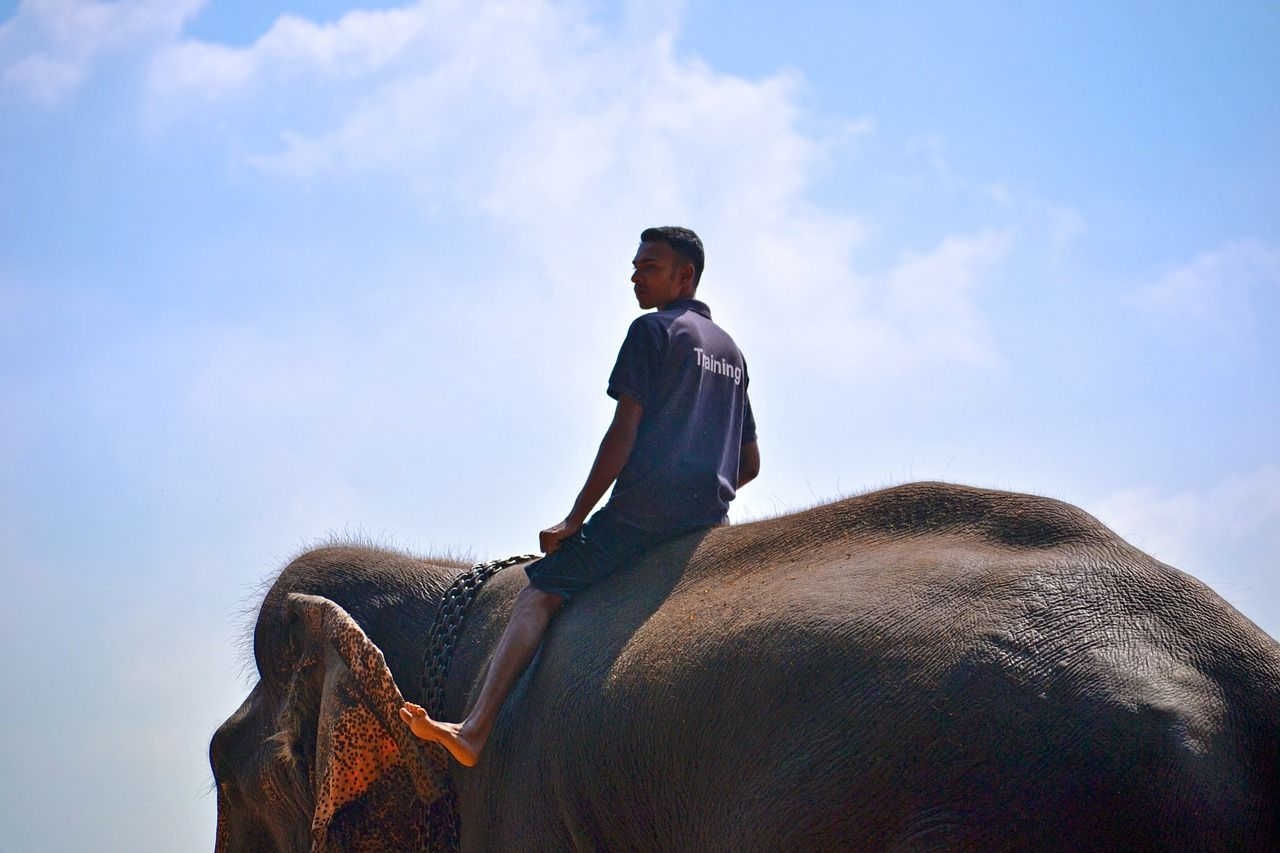 Man riding an elephant to train it for tourism.