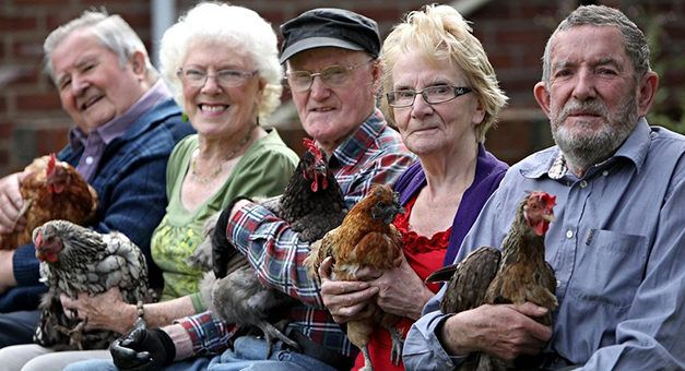 Hens Are Transforming Lives At Retirement Homes