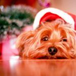 Americans Rely On Our Dogs Help Us Get Through the Holiday Madness