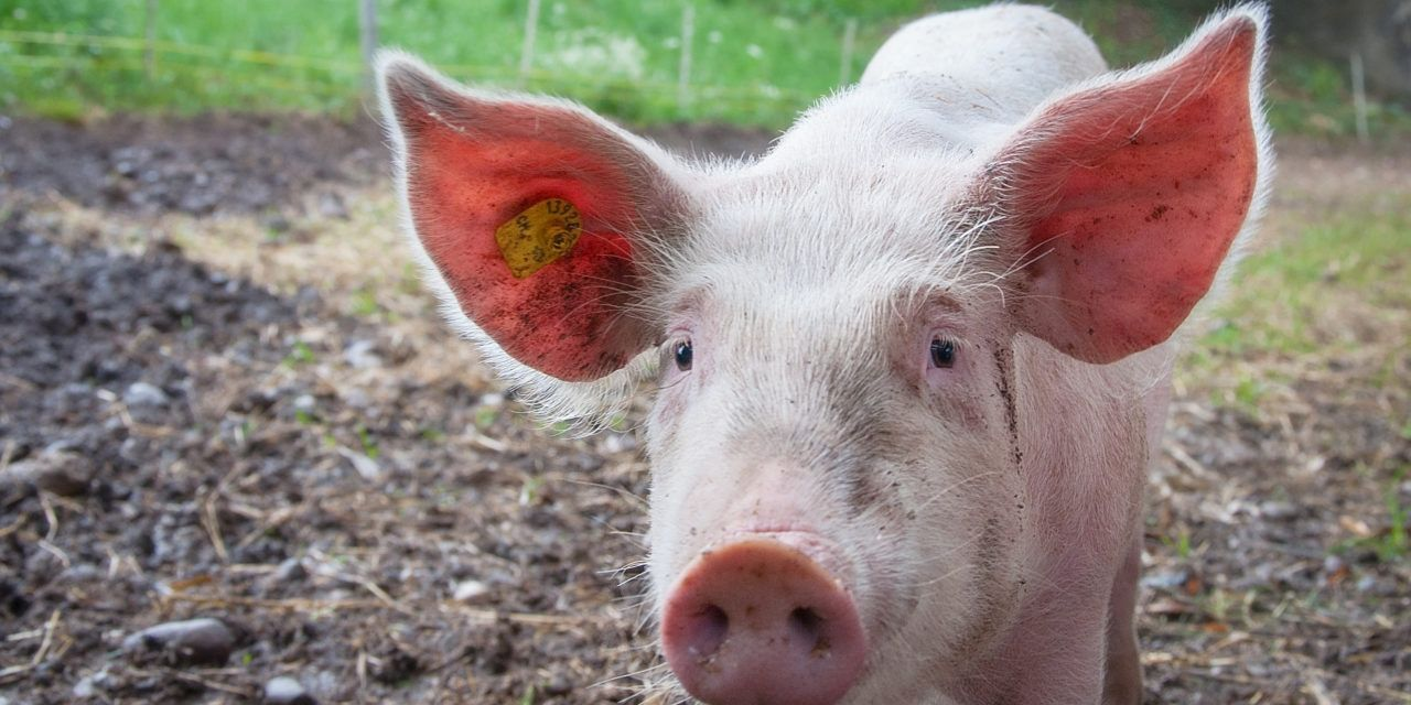 The USDA Wants to Strip Animal Cruelty Standards from the Organic Label