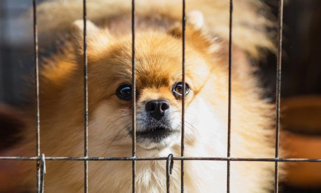 UK Introduces Groundbreaking Legislation to Stop Online Puppy Mill Dealers
