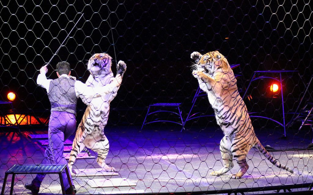 Scotland Becomes First UK Country to Ban Wild Animals in Circuses