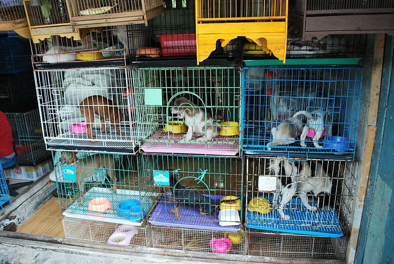 pets in cages