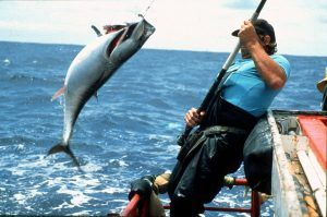 Angler catching bluefin tuna while fishing