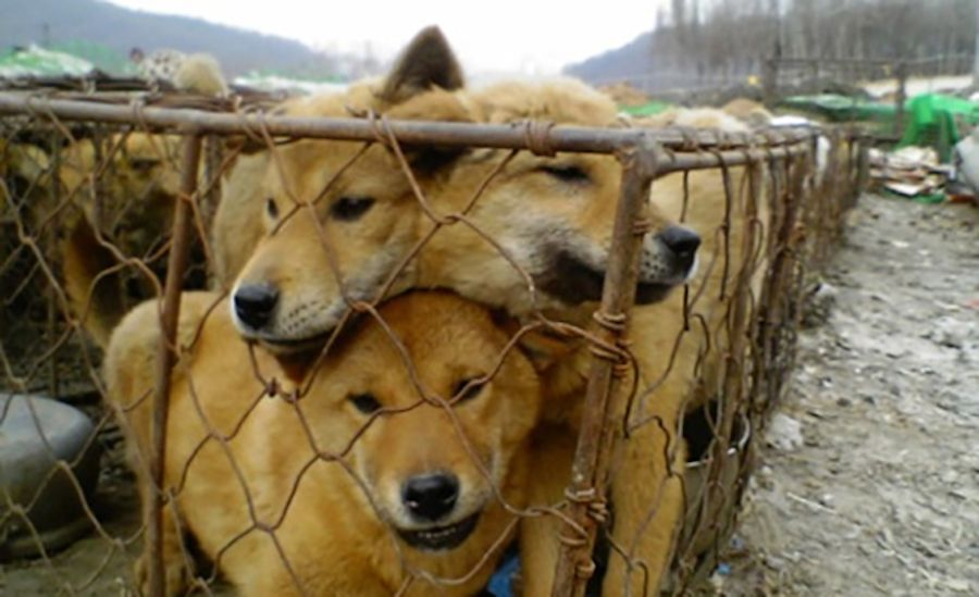 Sign: Ban Dog and Cat Meat Before the Winter Olympics in S. Korea