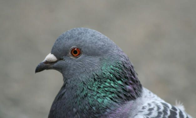 Company Caught Drowning Live Pigeons Now Faces 25 Animal Cruelty Charges