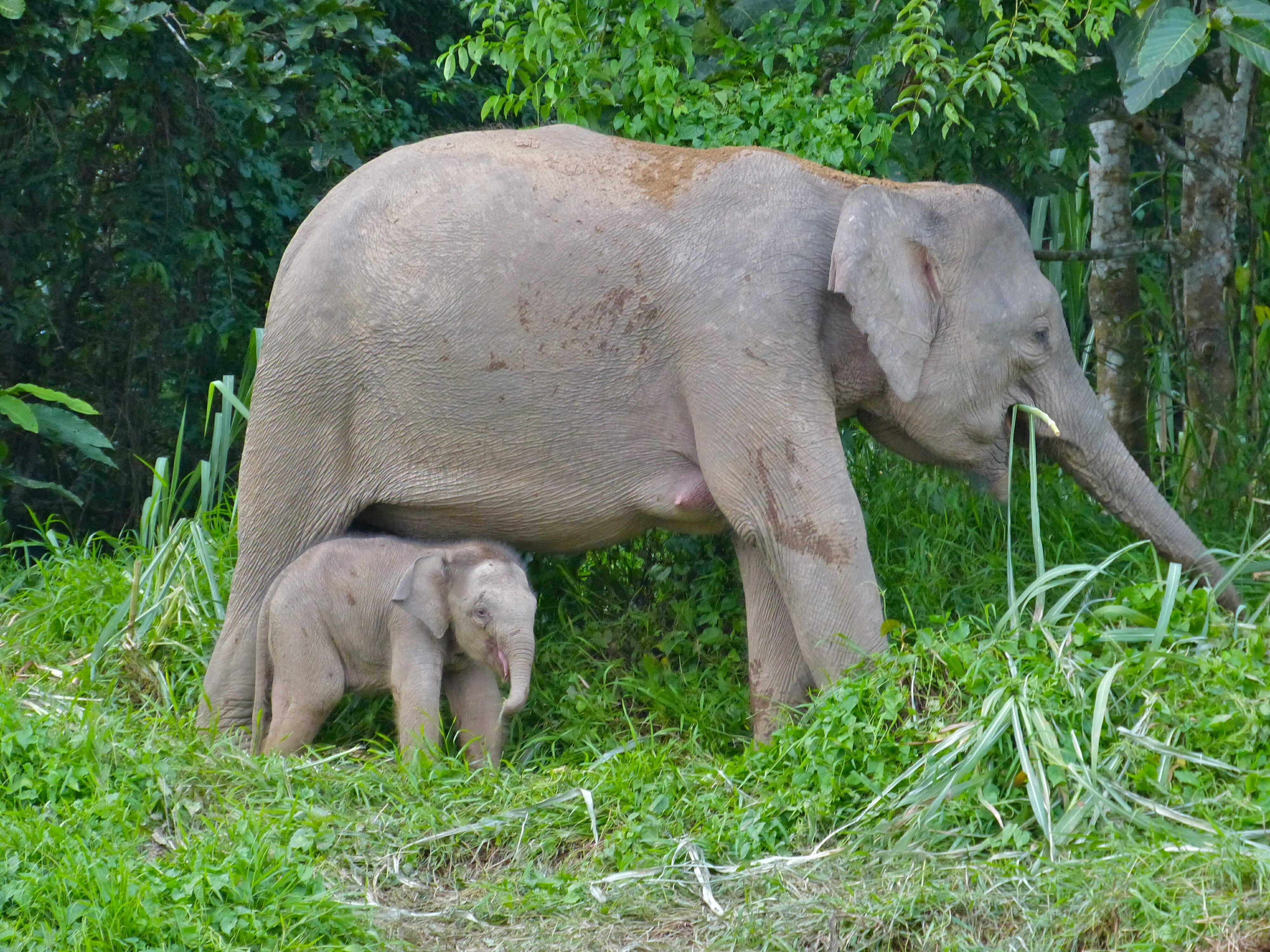 A female elephant with her calf. Unlike many elephants, these two are safe from the effects of war.