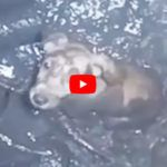 VIDEO: Brave Man Rescues Trapped, Crying Dog from Muddy Well
