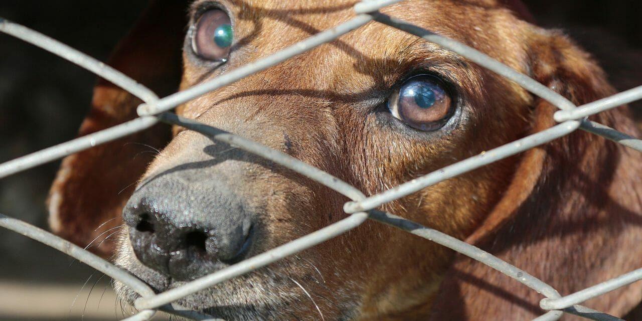 Over 1,000 Pounds of Dog Meat Seized by Police in Philippines Bust