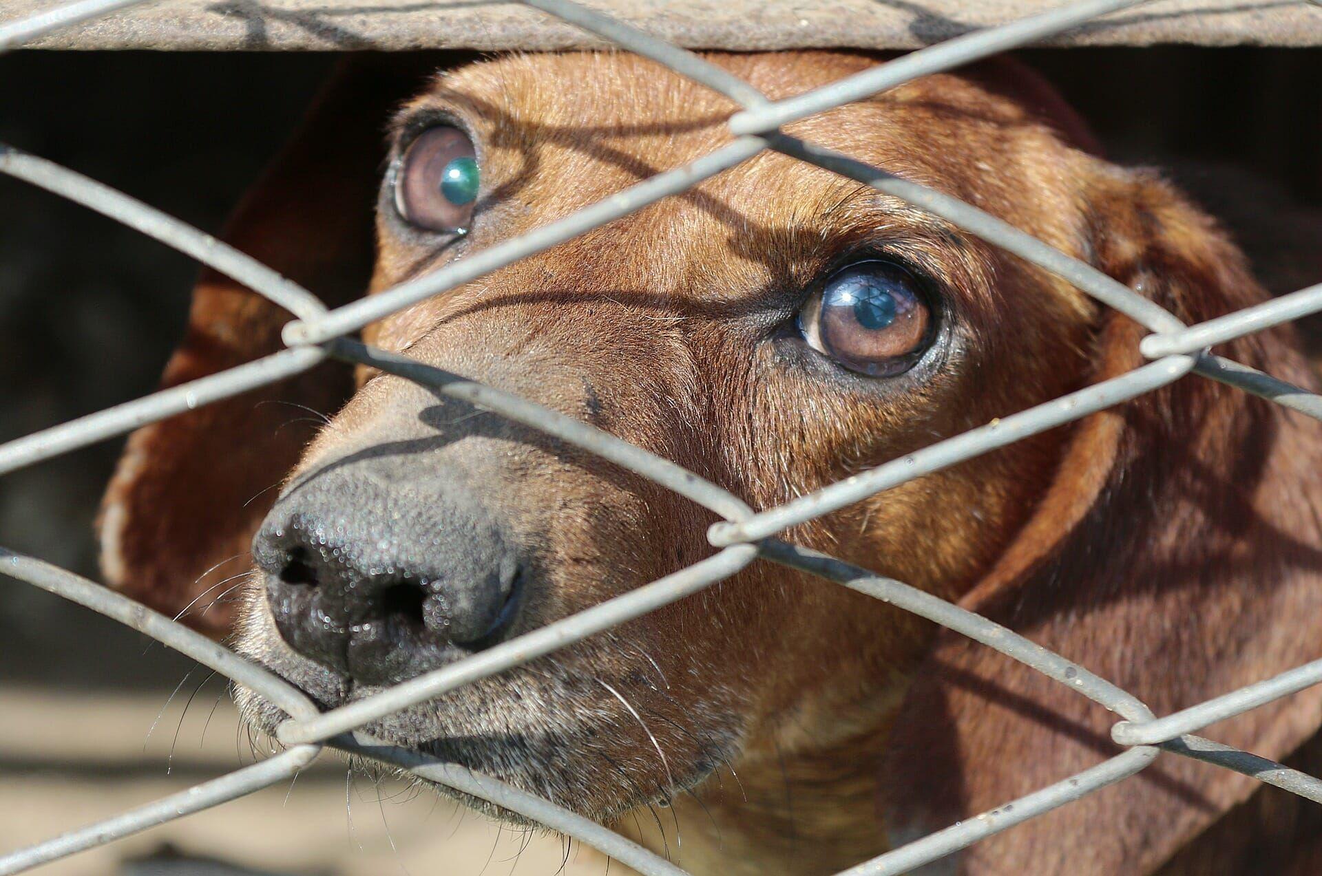 Caged dog.
