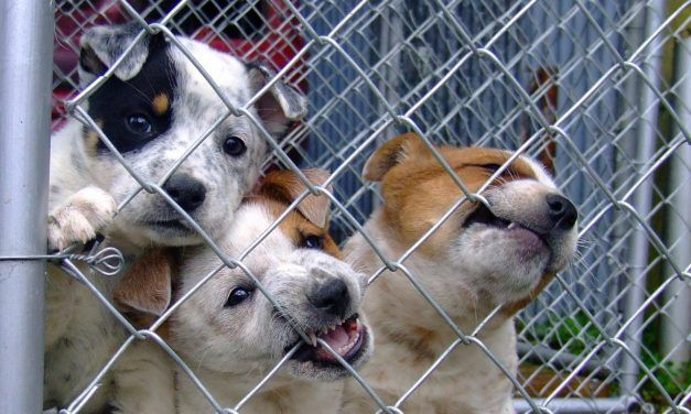 Baltimore May Be the Next City to Ban Selling Dogs and Cats in Pet Stores