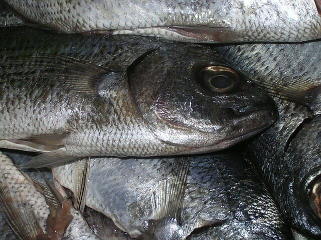 The Dirty Truth about Fish Farms You Need to Know About