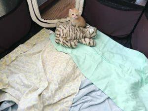 Rescued orphan kitten