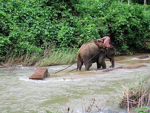 Elephant hauling timber in Myanmar.