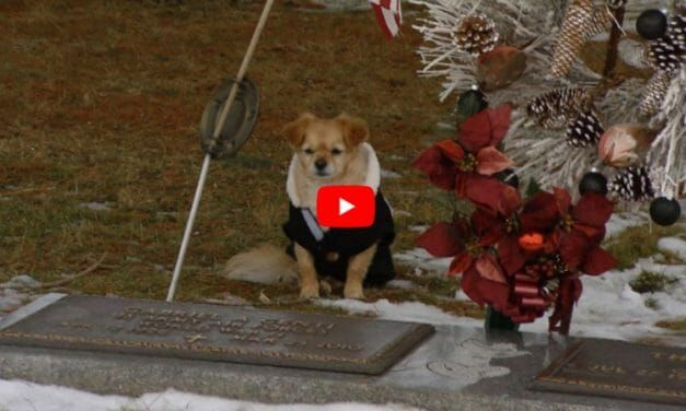 VIDEO: Loyal Chihuahua Refuses to Leave Owner's Grave