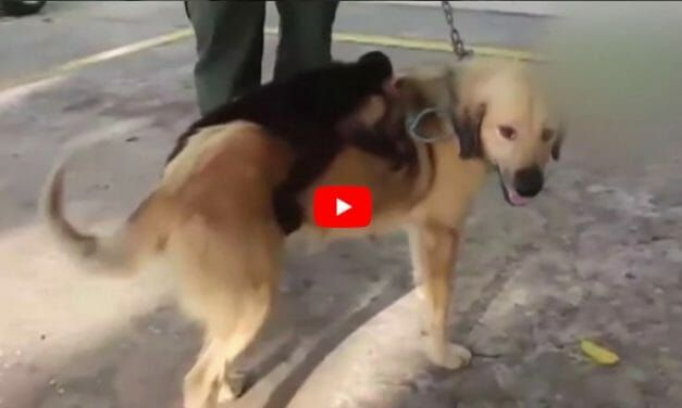 Viral Video of Dog who 'Adopted' Monkey is Not as Cute As It Seems