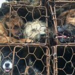 Sign: For 'Year of the Dog,' End China's Horrific Dog and Cat Meat Trade