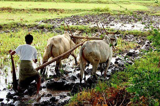 Farming in Myanmar.