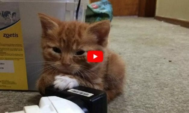 VIDEO: 'Forever Tiny' Rescue Kitten Finds the Perfect Home