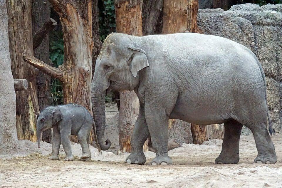 Elephants Win! Hong Kong To Ban Domestic Ivory Sales