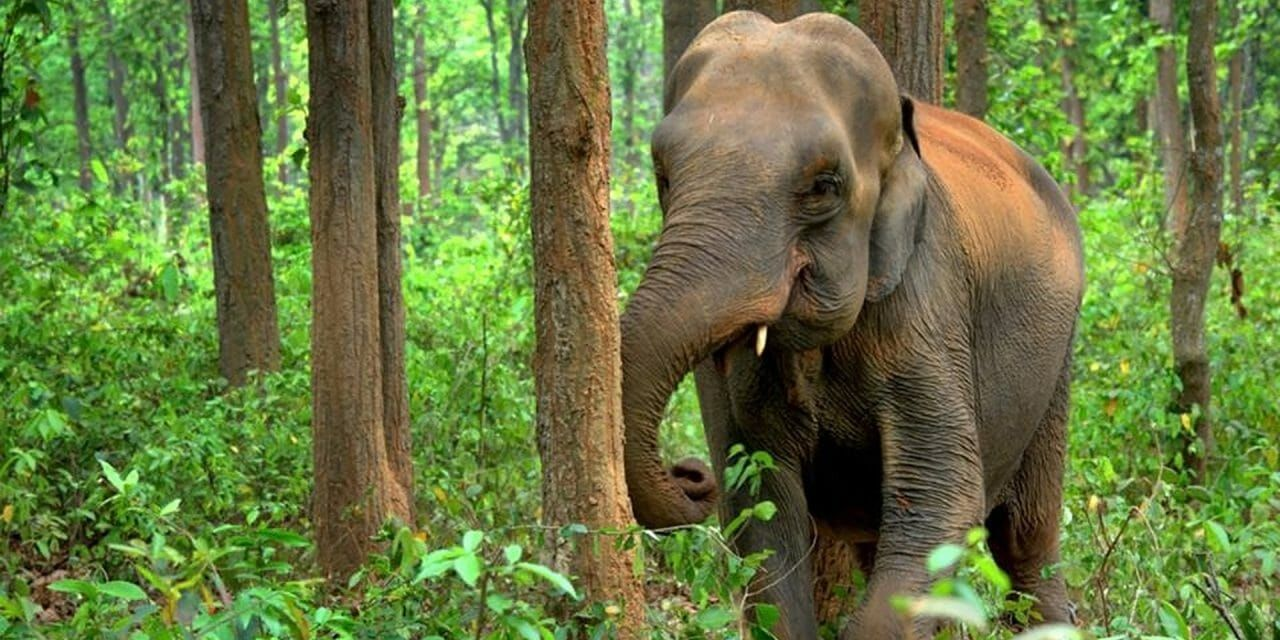 Myanmar Unveils 10-Year Plan to Save the Elephants