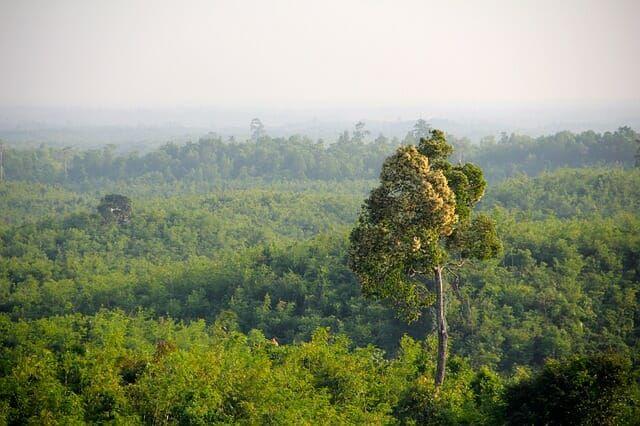 Jungle in Myanmar
