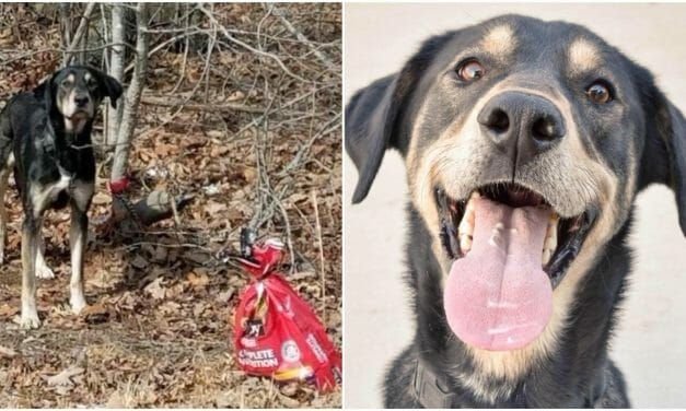 Dog Found Tied to Tree with a Note Has Found His Forever Home