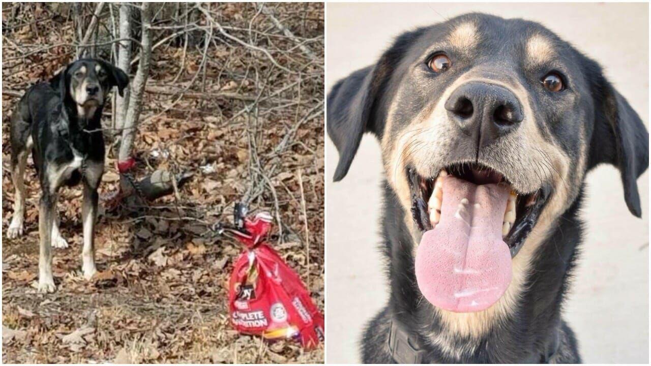 abandoned dog finds home