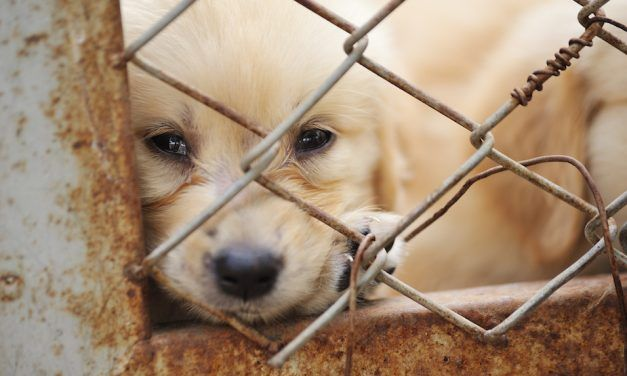 Sign: Stop the Horrific Yulin Dog Meat Festival in 2018