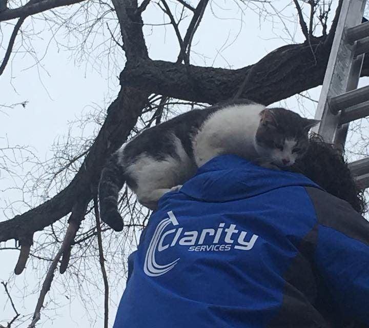 Heroic Window Cleaner Saves Cat Stuck in Tree When Nobody Else Will Help