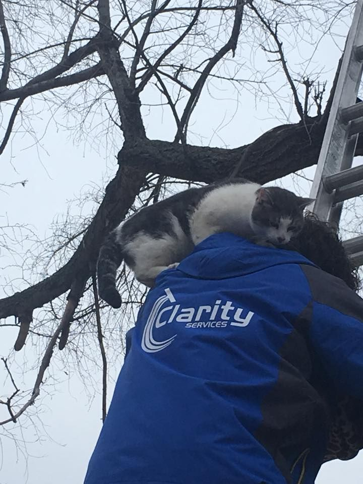 cat rescued from tree