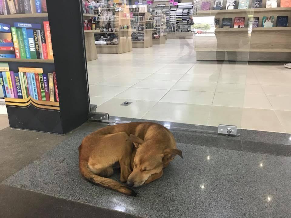dog shoplifts book