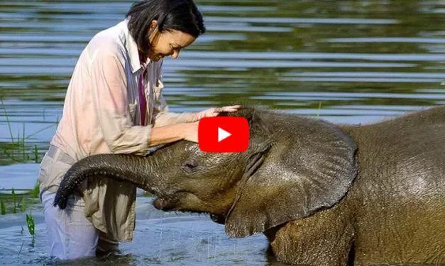 VIDEO: Rescued Orphan Elephant Conquers Fear of Water, Thanks to Caring Human