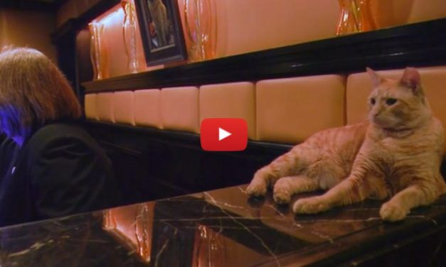 VIDEO: This Handsome Rescue Cat Runs His Own Hotel