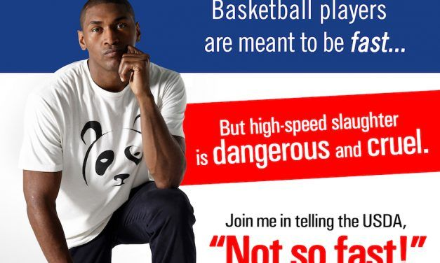 Star Athletes Speak Out Against High-Speed Slaughter of Pigs