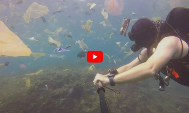 VIDEO: Divers Swimming Through Ocean of Trash Reveal the Massive Extent of Our Plastic Waste Problem