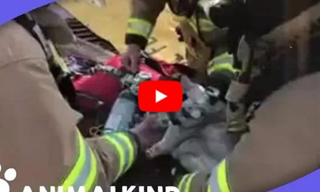 VIDEO: Firefighters Use Tiny Oxygen Mask to Save Cat Pulled from Fire