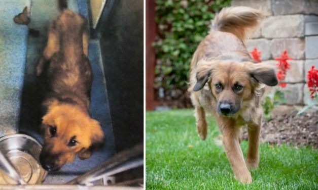 Abandoned Dog Found in Foreclosed House Now Has the Best Life