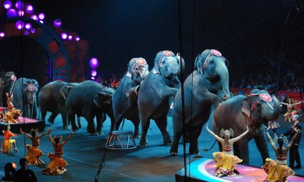 UK Pledges to Ban All Wild Animals in the Circus by 2020
