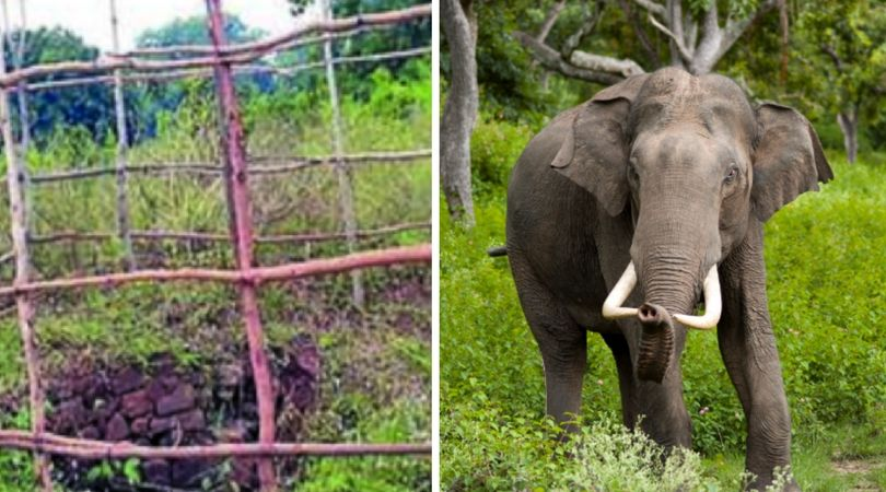 These Simple Bamboo Fences are Saving Elephants from Dying In Wells