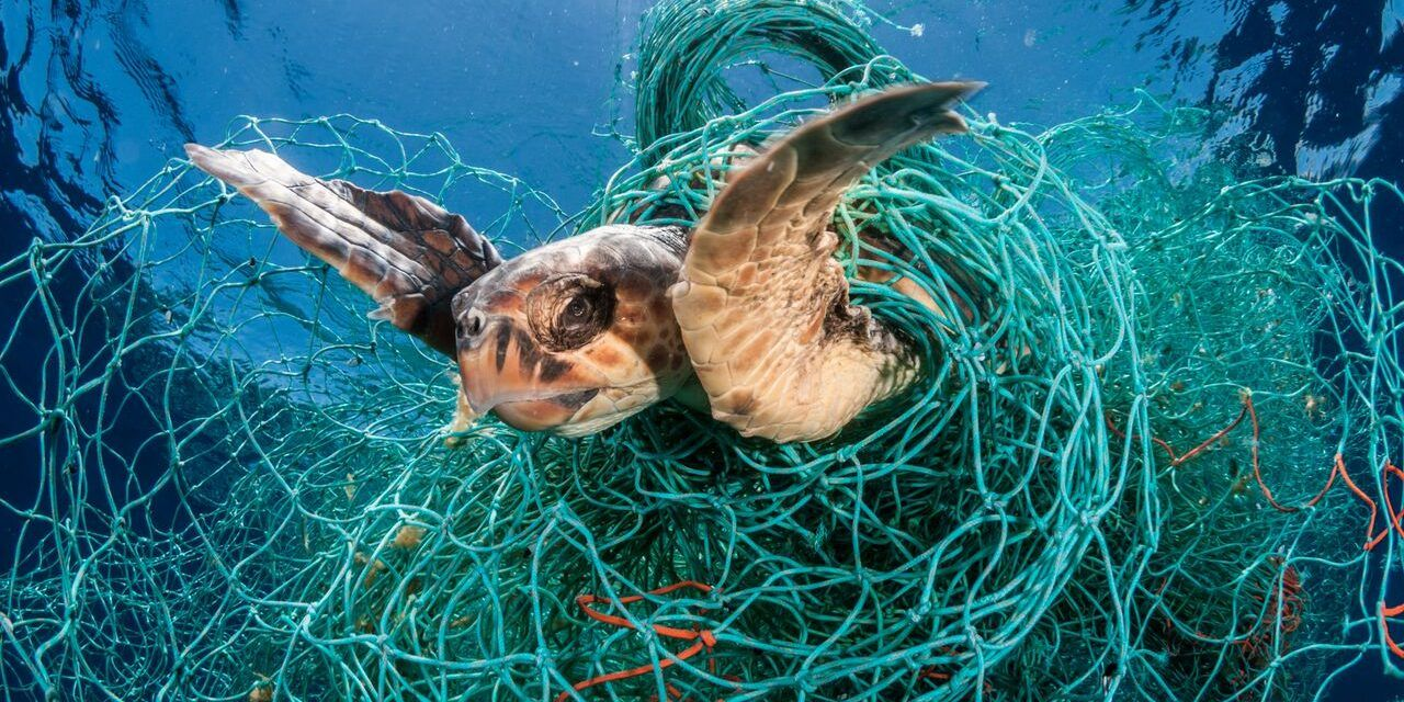 Fishing Industry 'Ghost Gear' is Killing Millions of Marine Mammals