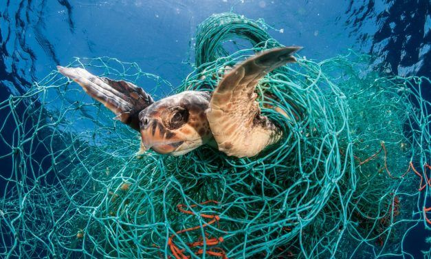 Fishing Industry 'Ghost Gear' is Killing Millions of Marine Mammals