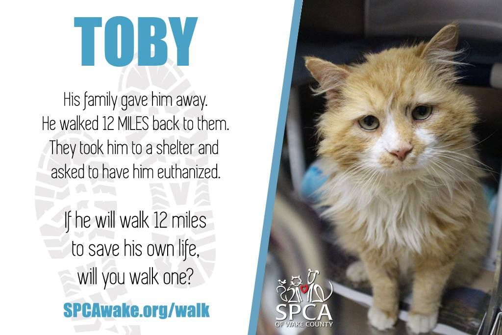 Toby cat rescue