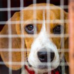 SIGN: Stop Killing Dogs and Cats Like Trash After Research Ends