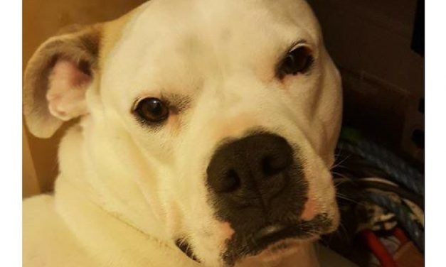 SIGN: Justice for Dog Thrown from Balcony and Beaten with Sticks by Mob