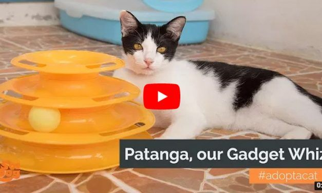 VIDEO: Meet Patanga, the 'Gadget Whiz' Kitty Who Needs a Forever Home