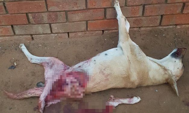 SIGN: Justice for Pet Dog Skinned Alive for 'Fresh Meat'