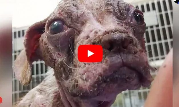 VIDEO: Meet the Abused Puppy Whose Incredible Recovery Inspired Better Animal Rights Protections